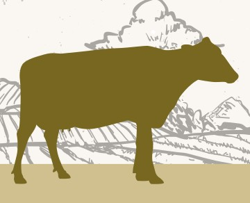 שוק על ירך בית קצבים בלוינסקי 65 תל אביב. כל הבשרים בחיתוך במקום, מהחווה אל האטליז.