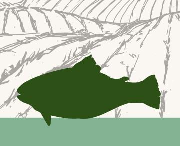 בשר דגים שוק על ירך בית קצבים בלוינסקי 65 תל אביב. כל הבשרים בחיתוך במקום, מהחווה אל האטליז.