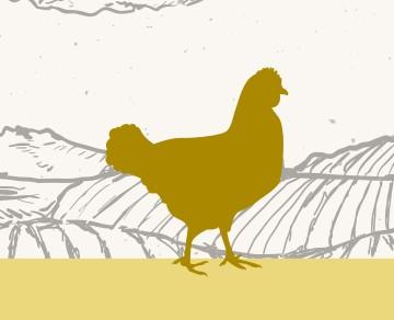 בשר עוף שוק על ירך בית קצבים בלוינסקי 65 תל אביב. כל הבשרים בחיתוך במקום, מהחווה אל האטליז.